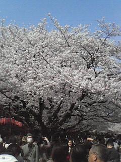 ダーウィン展と上野公園